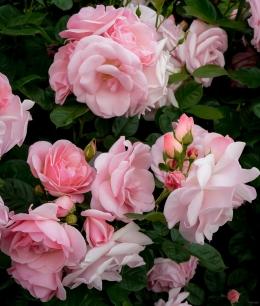 Rose Group, Fairview, Oregon